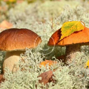 Six Simple Steps to Mushroom Farming